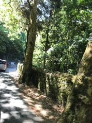 Winding roads enroute the Pena Palace